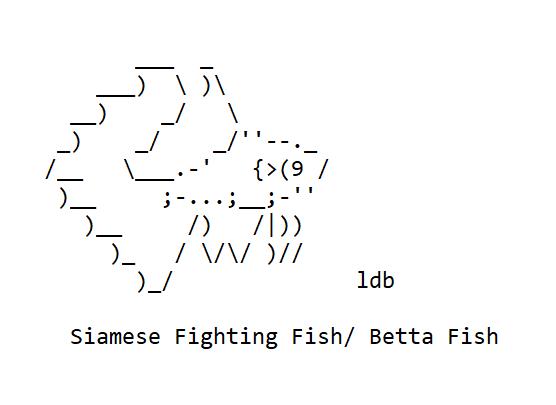 Betta Siamese Fighting Fish